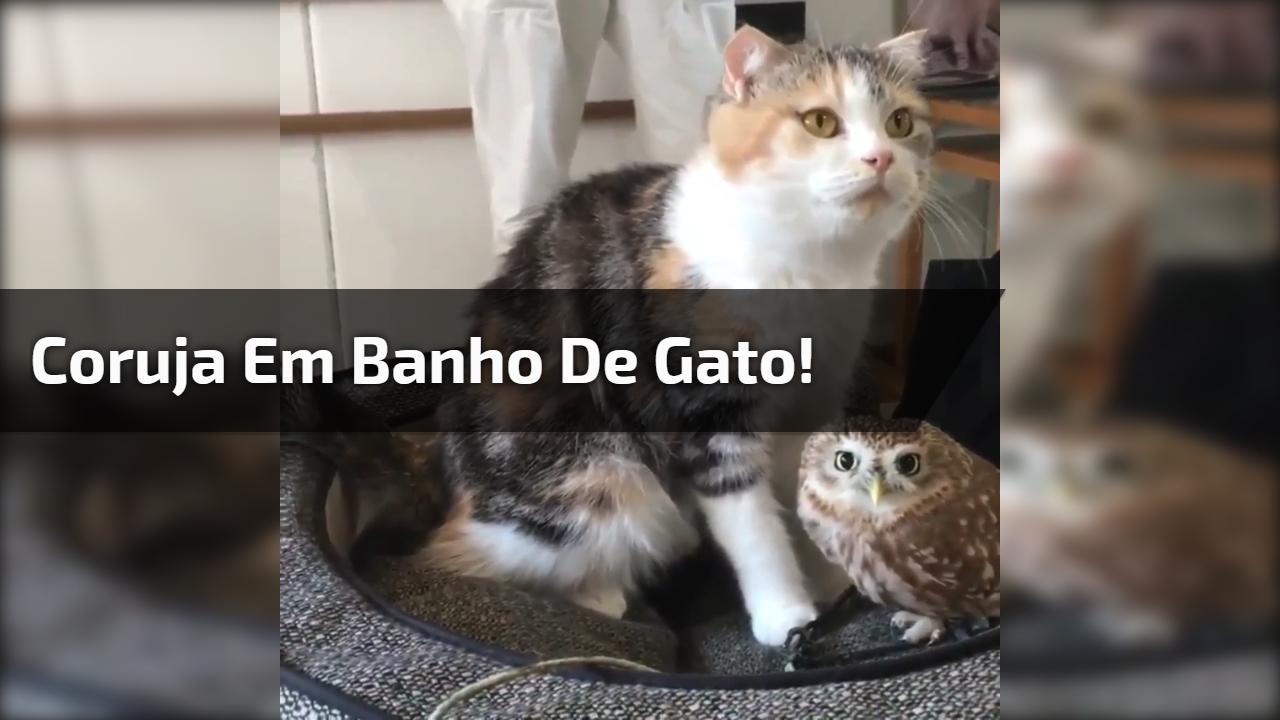 Coruja em banho de gato!