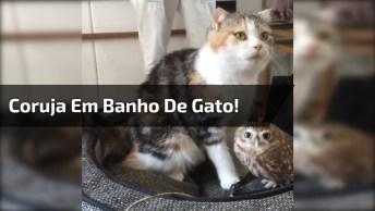Gata Dando Banho Em Coruja, Que Cena Mais Fofa E Diferente!