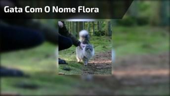 Gata Flora, Ela Tem Muitos Seguidores Espalhados Pelo Mundo Todo!