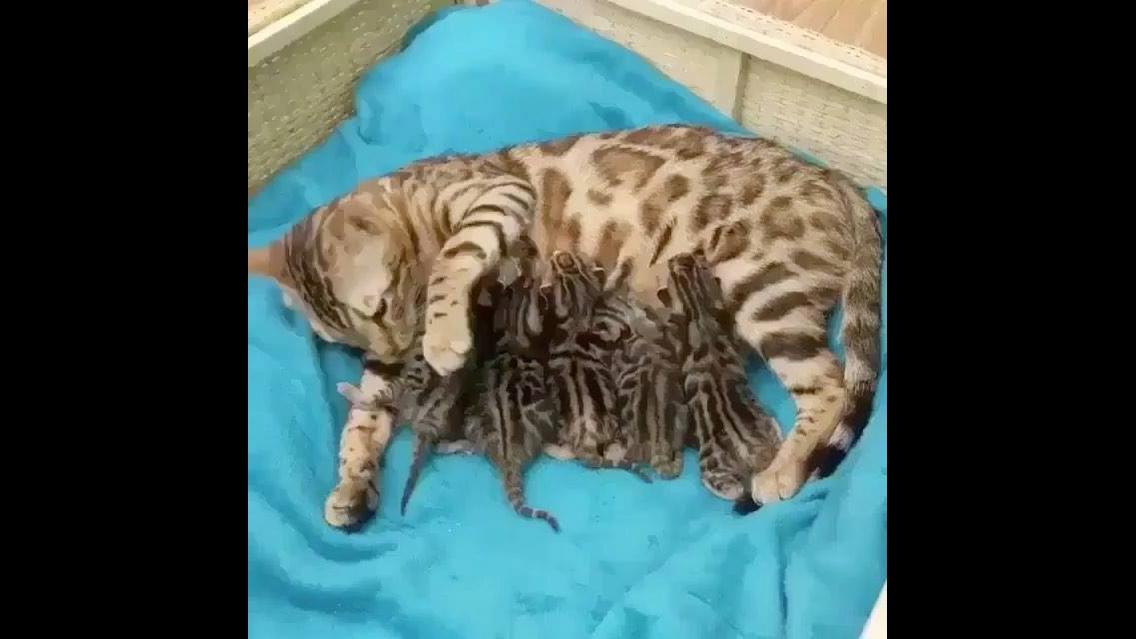Gatinha amamentando seus filhotinhos