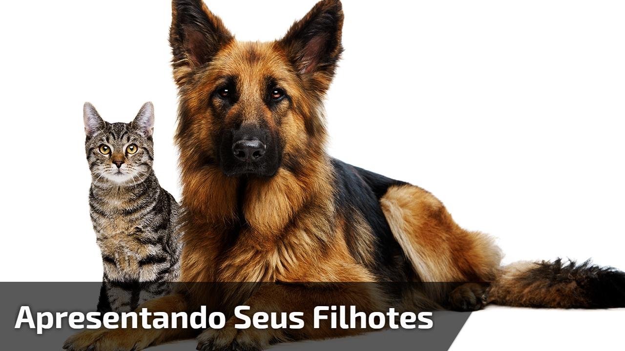 Gatinha apresentando seus filhotes para cachorro, olha só que fofura de vídeo!!!