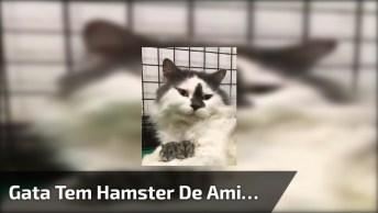Gatinha Convive Com Hamster Tranquilamente, E Ainda Cuida Como Se Fosse Filhotes