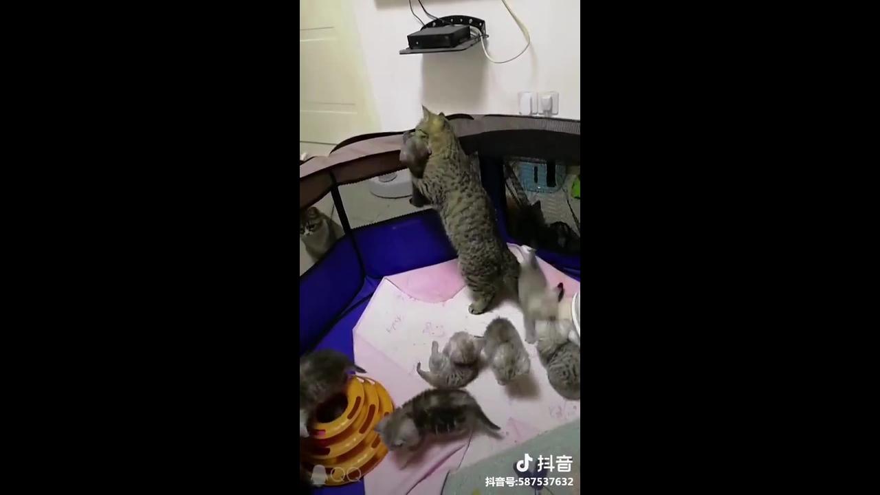 Gatinha cuidando de seu filhotinhos