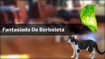 Gatinha Fantasiado De Borboleta, Olha Só O Charme Dela Que Linda!