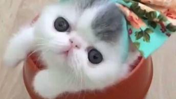 Gatinha Lidna Com Laço Na Cabeça Dentro De Pote, Que Fofura!