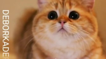 Gatinha Linda Com Pelo Amarelo E Olhos Pretinhos, Que Fofura!