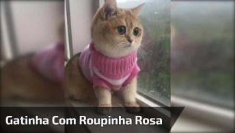 Gatinha Linda Com Roupinha Rosa, Ela Só Está Observando. . .