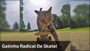 Gatinho Andando De Skate, Olha Só Que Animal Inteligen E Fofinho!