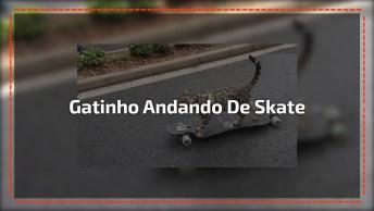 Gatinho Andando De Skate, Veja Que Amiguinho Espertinho Gente!