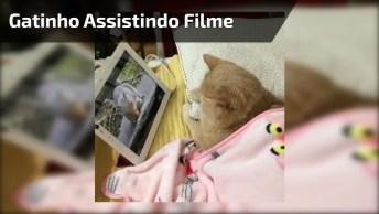 Gatinho Assistindo Filminho No Tablet Debaixo Das Cobertas, Que Fofinho!