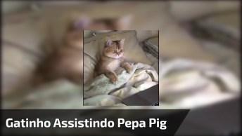 Gatinho Assistindo Pepa Pig, O Vídeo Mais Lindinho Que Você Vai Ver Hoje!