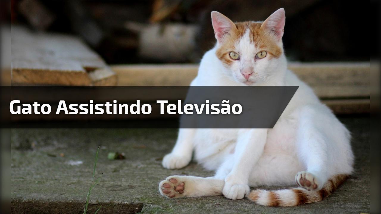 Gato assistindo televisão