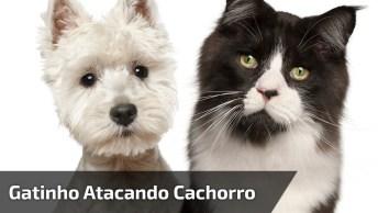 Gatinho Atacando Cachorro, O Mundo Esta Ao Contrário E Nem Notamos, Hahaha!