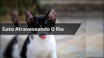 Gatinho Atravessando O Rio, Quem Disse Que Gatos Tem Medo De Água?!