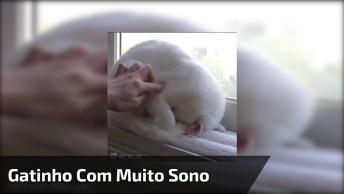 Gatinho Branco Cheio De Preguiça, Olha Só Quanta Fofura Este Animal!