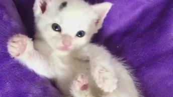 Gatinho Branco Com Pintinha Preta Na Tesa, Olha Só Que Coisinha Mais Linda!