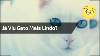 Gatinho Branco Dos Olhos Azuis E Narizinho Rosa, Que Lindo!