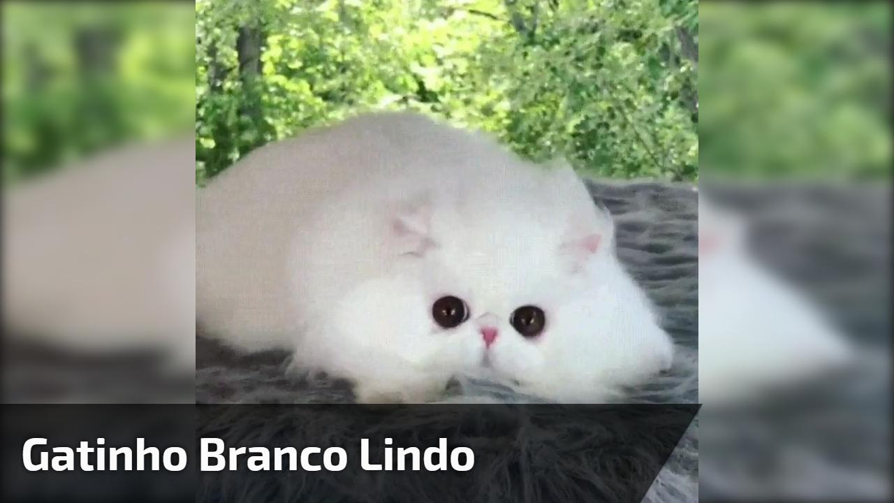 Gatinho branco lindo, ele parece de pelúcia de tão fofo, veja estes olhinhos!!