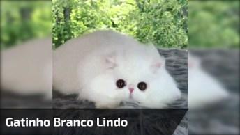 Gatinho Branco Lindo, Ele Parece De Pelúcia De Tão Fofo, Veja Estes Olhinhos!