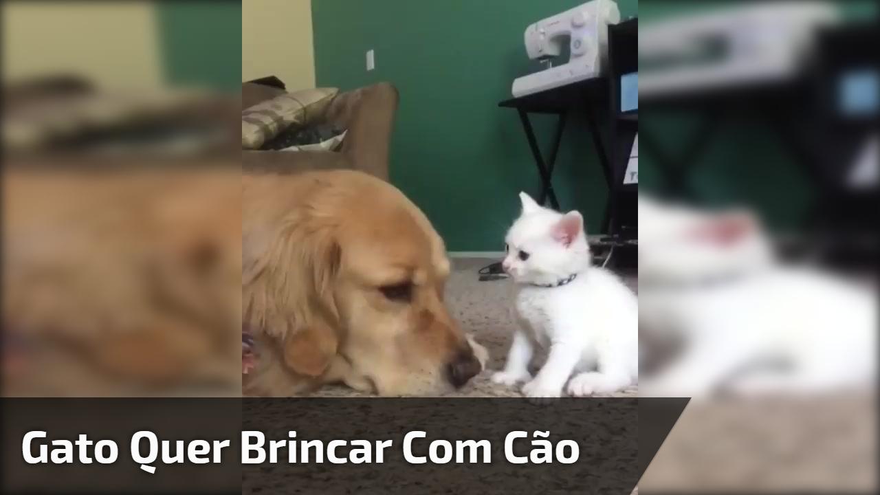 Gato quer brincar com cão