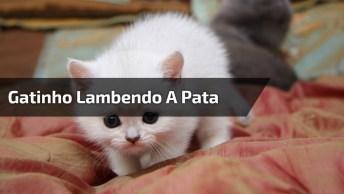 Gatinho Branquinho Lambendo As Patinhas, Que Animalzinho Mais Fofo!