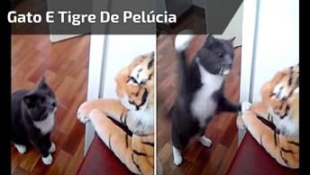 Gatinho Brigando Com Tigre De Pelúcia, O Vídeo Mais Engraçado Que Você Vai Ver!