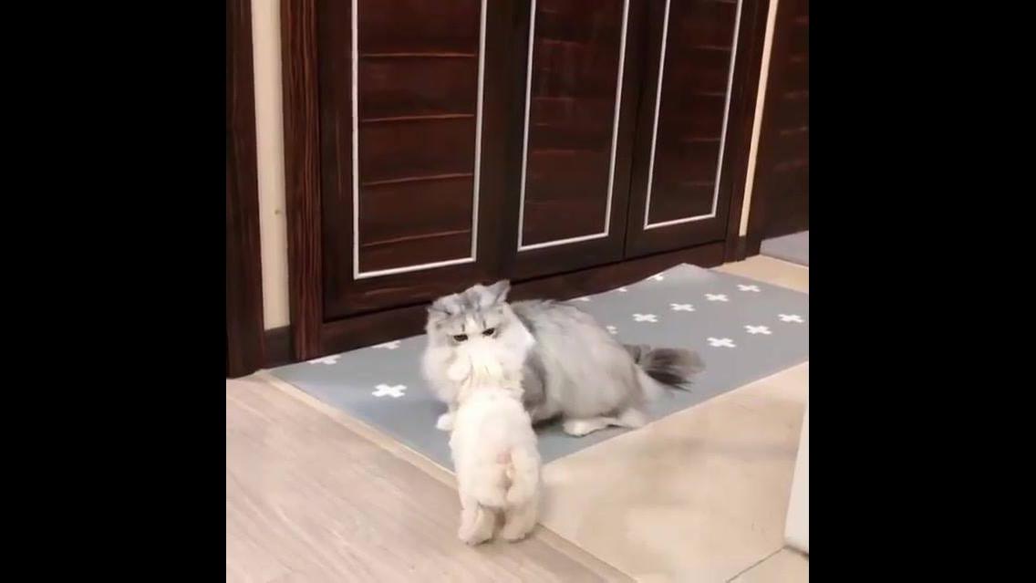 Gatinho brincando com filhote de cachorro