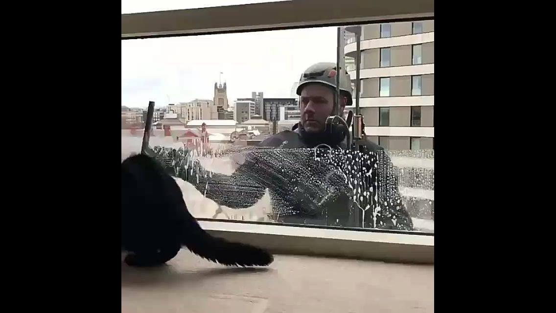 Gatinho brincando com homem limpando o vidro