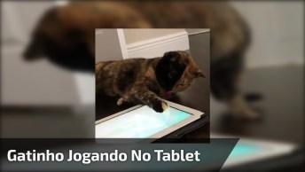 Gatinho Brincando Com Joguinho Em Tablet, Olha S´[ O Que Coisinha Mais Linda!