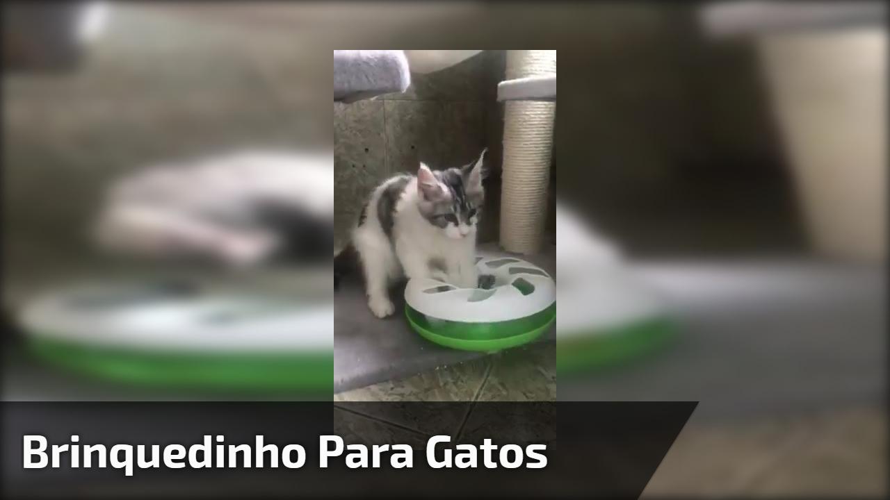 Brinquedinho para gatos