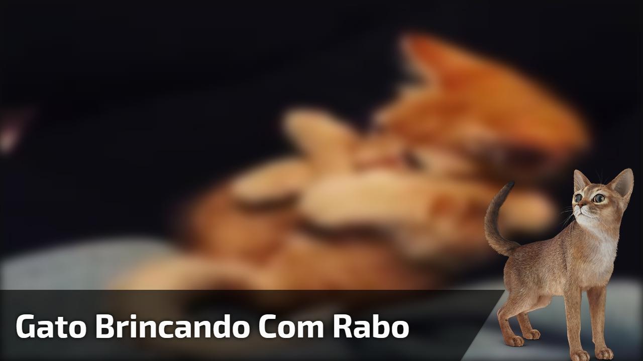 Gato brincando com rabo