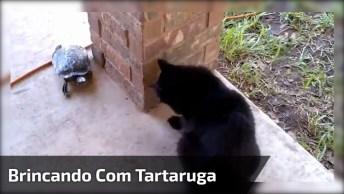 Gatinho Brincando Com Tartaruga, Que Vídeo Fofinho Gente, Confira!