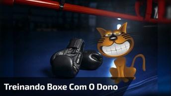Gatinho Brincando De Boxe Com Seu Dono, Olha Só Que Coisinha Mais Fofa!