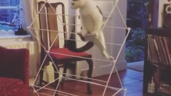 Gatinho Brincando De Escalada, Olha Só A Habilidade Deste Amiguinho!