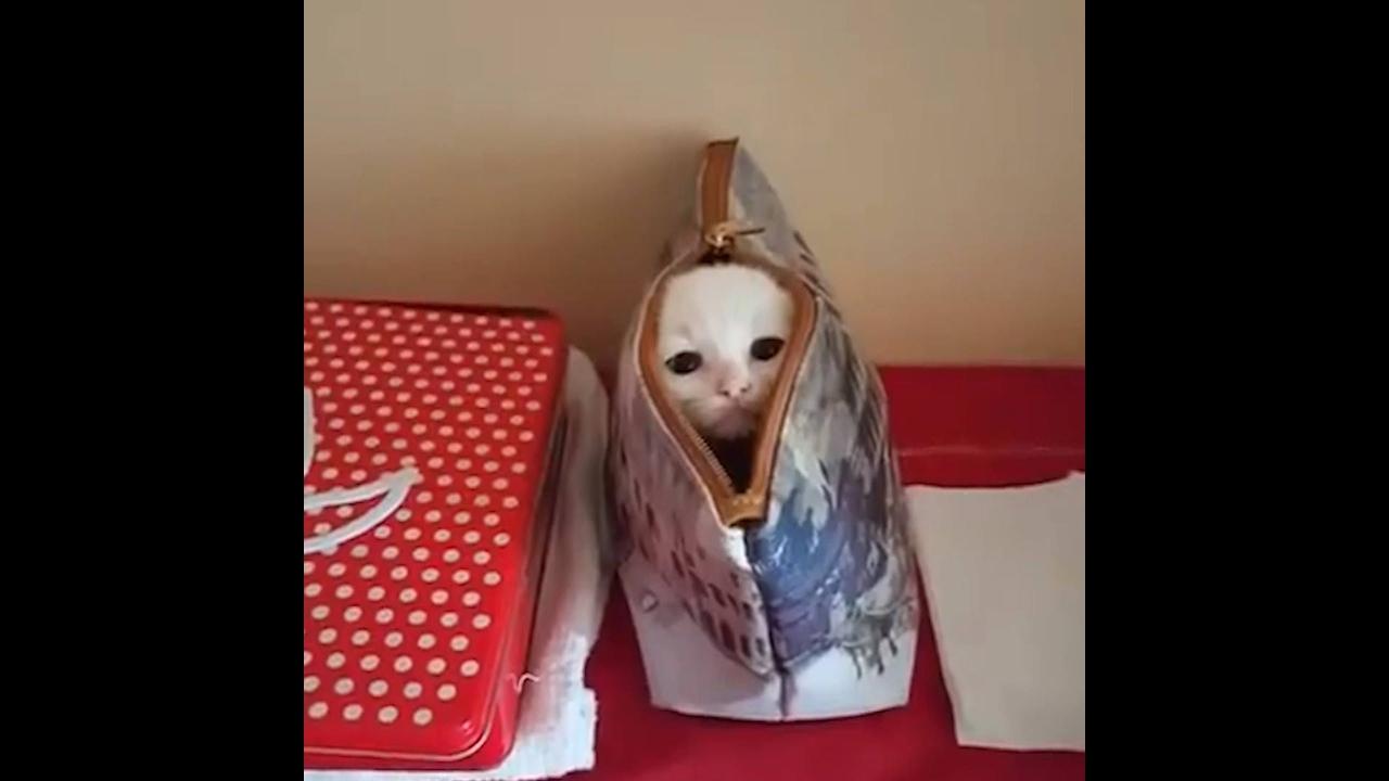 Gatinho brincando de esconder dentro de bolsinha
