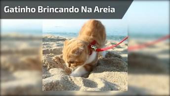 Gatinho Brincando Na Areia Da Praia, Olha Só Que Fofura De Animal!
