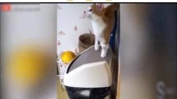 Gatinho Caindo Dentro Da Lixeira, Os Gatos Vivem Se Assustando!