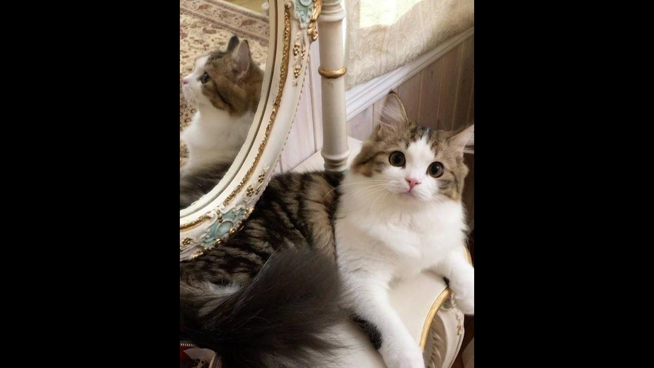 Gatinho com a carinha mais fofinha este gatinho olhando para sua dona