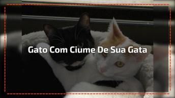 Gatinho Com Ciume De Sua Gatinha, Olha Só A Carinha De Bravo Dele!