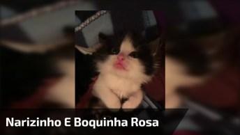 Gatinho Com Narizinho E Boquinha Rosa, Olha Só Que Criaturinha Mais Linda!