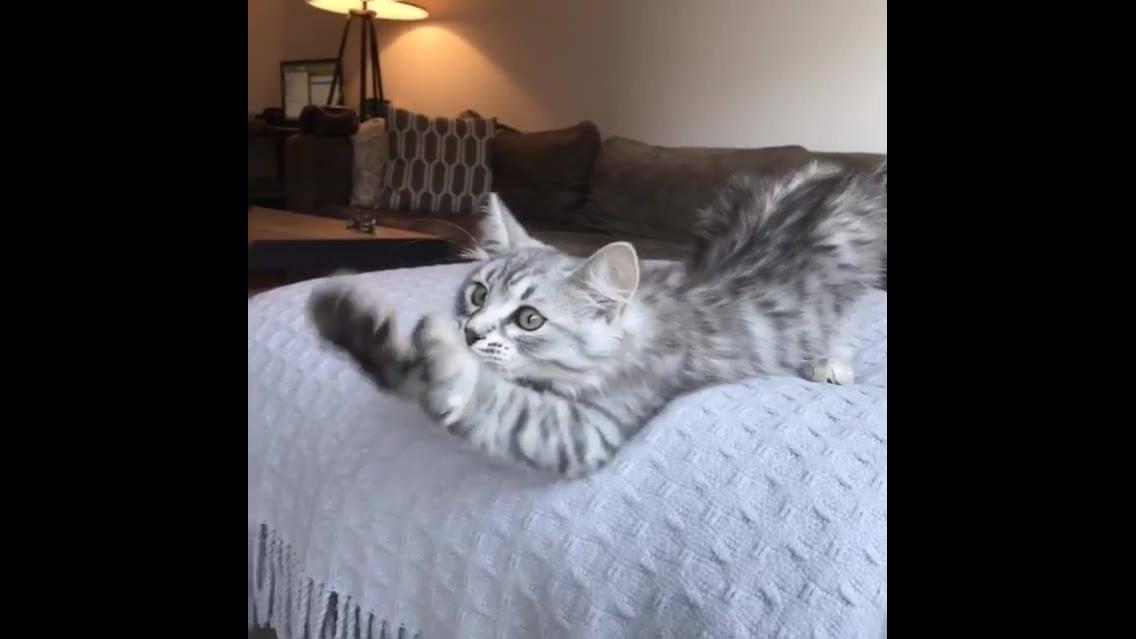 Gatinho com patinhas no ar, ele é uma fofura