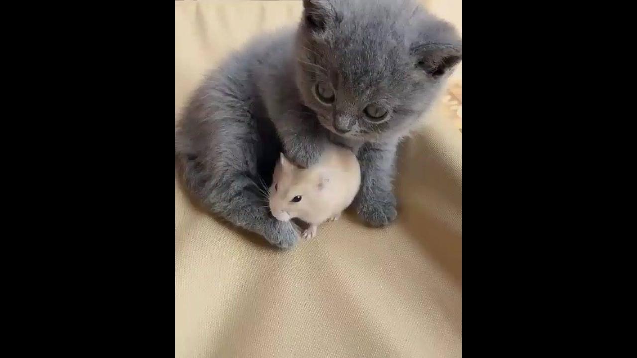 Gatinho com ratinho