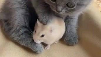 Gatinho Com Ratinho, Quem Foi Que Disse Que Eles Não Podem Ser Amigos?