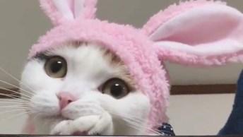 Gatinho Com Toquinha De Coelhinho, Olha Só Esta Carinha Linda Que Fofura!