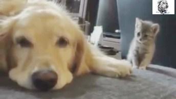 Gatinho Consolando Amigo Cachorro Que Esta Triste, Muito Fofinhos!