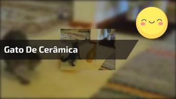 Gatinho Curioso Com O Gato De Cerâmica, Ele Mexe Com Ele De Várias Formas, Kkk!