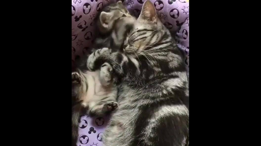 Gatinho curtindo a mamãe