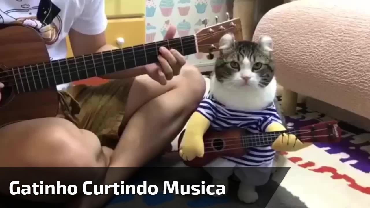 Gatinho curtindo musica