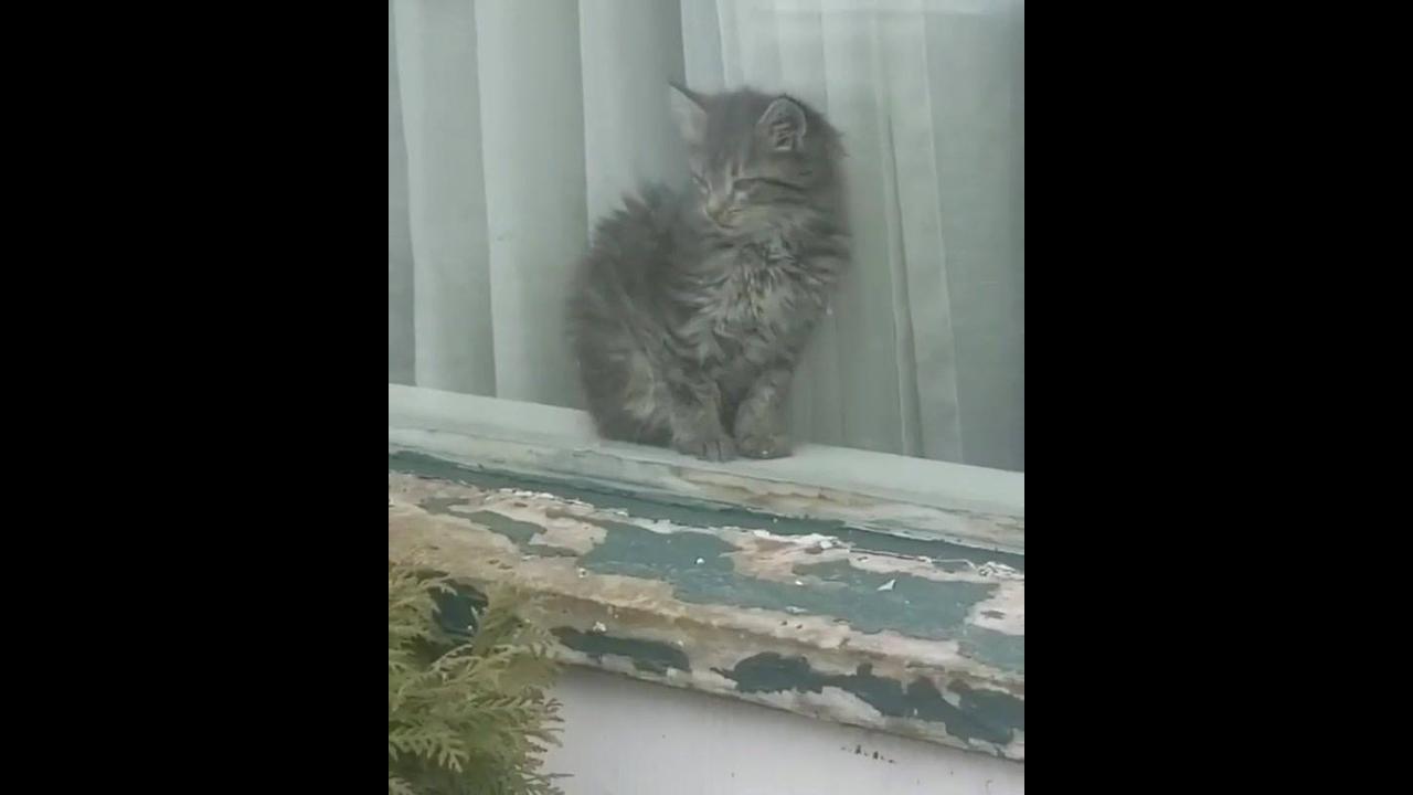 Gatinho curtindo uma preguicinha na janela