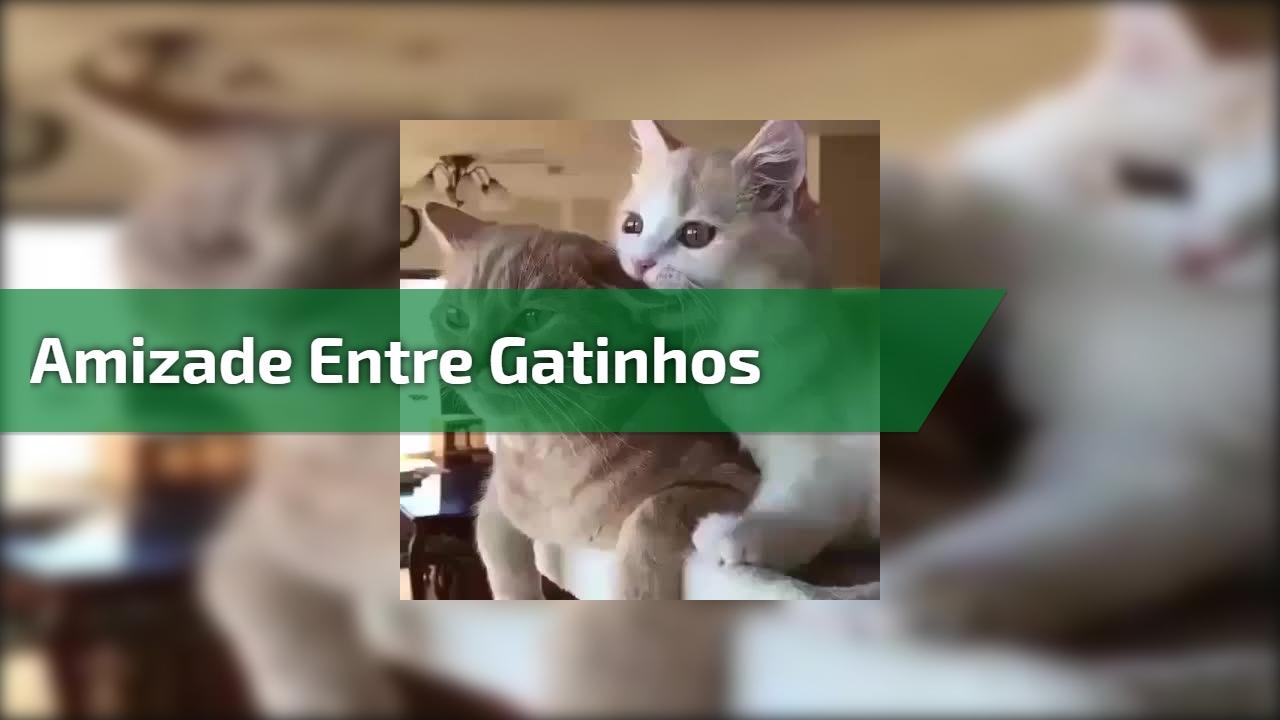 Amizade entre gatinhos